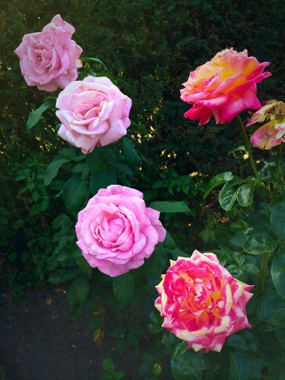 Rose Garden - fall